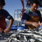 El Mapama abre la pesca de sardina ibérica en el Golfo de Cádiz