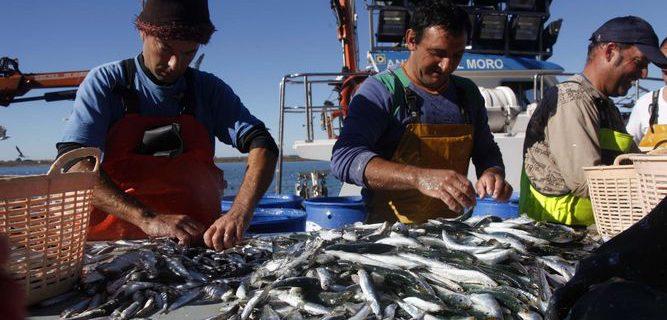 Resultado de imagen para pesca de Sardinas