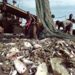 La pesca ilegal entra en España y en la UE a través de Estados miembros