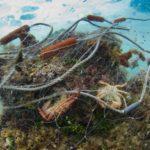 Las artes de pesca perdidas o abandonadas suman 640.000 toneladas