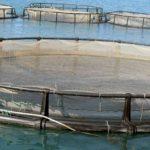 Ampliarán la reubicación de jaulas de acuicultura de Murcia para asegurar la reparación de instalaciones afectadas por el temporal