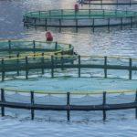 Un estudio de AZTI evidencia la ausencia de parásitos en la acuicultura europea