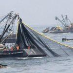 Modestas capturas de anchoveta en Perú