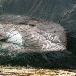 Shepherd ataca a los arrastreros pelágicos por la captura incidental de delfines.