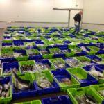 La merluza es el pescado más vendido en las lonjas de Francia