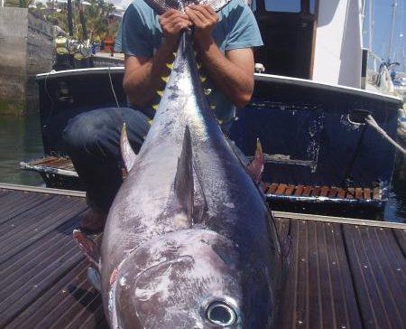El valor comercial del atún tiene más que el PIB de 108 países