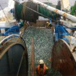 Las contradicciones de la pesca en el Cantábrico y Noroeste