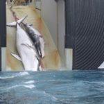 Noruega autoriza la captura de 1.278 ballenas pese a la prohibición internacional