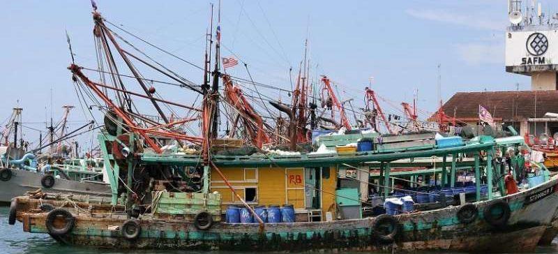 Cuatro países del sudeste asiático utilizaron 40 millones de toneladas para harina en 60 años