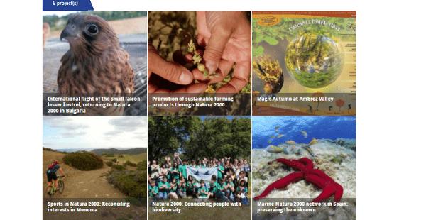 España candidata a los Premios Natura 2000 de conservación marina