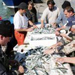 El volumen de pescado en la primera venta en España cayó un -23 %