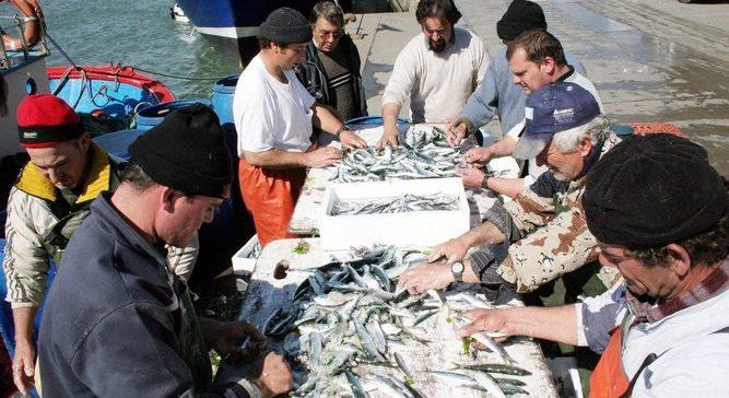 La Junta de Andalucía ve negativo el plan de la sardina al reducir el 35% la cuota