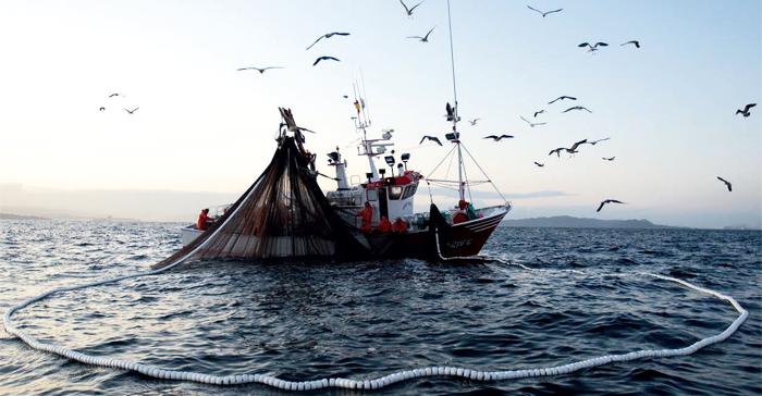 El Plan de Recuperación de la Sardina establece un tope de 2.860 toneladas para 250 barcos