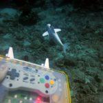Sofi, un pez robot que se mueve por los fondos trabaja a distancia