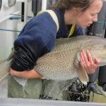 La disminución de bacalao en  Canada no sorprende a los científicos