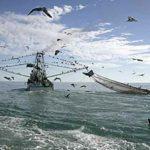 Holanda utilizó ayudas de investigación para potenciar la pesca eléctrica