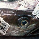La merluza de pincho de Celeiro llevará una etiqueta con la fecha de descarga