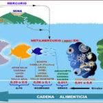 Un 38 % de 175 países están expuestos a niveles de metilmercurio por encima de lo normal