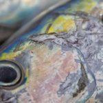 Las fake news de la pesca abundan antes de un importante Congreso que dilucida grandes cuestiones