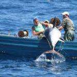 Interceptan un atún rojo capturado de forma ilegal en Marbella