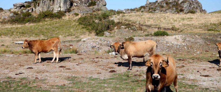 Evitar el consumo de carne y lácteos es la mejor manera de conservar la Tierra