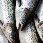 Estados Unidos importó el pasado año más pescado que nunca