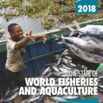 El aumento del consumo de pescado ha pasado de 9 kgr por habitante a 20,2 en 50 años
