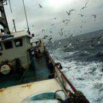 Un Brexit duro significaría más pescado, pero una gran caída de precios e ingresos para Gran Bretaña