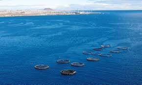 Canarias impulsa la acuicultura permitiendo la producción de 20.300 toneladas de especies