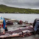 Japón pide retomar la pesca de ballenas con fines comerciales