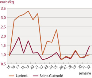 Aumento significativo del precio de la sardina en las lonjas de Francia, pero descenso en capturas