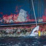 España y Japón tratan de convertir la pesca de tiburón en una pesca sostenible