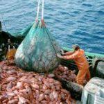Crecen las exportaciones pesqueras argentinas duran tres años seguidos