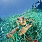Consensuar métodos de pesca sostenible en la cumbre `Nuestro Océano´