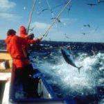 Los pescadores de bonito llevan un 30 por ciento de la cuota agotada a pocos días de faena
