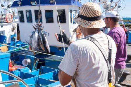 La flota de Canarias puede pesar bonito al llegarse a un intercambio con Portugal