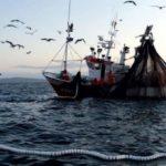 Cierre de la pesca de jurel en Cantabria y Asturias y del alfonsino