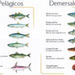 La mejora de  las poblaciones de especies demersales deroga los planes de recuperación