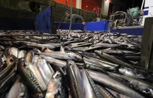 El reparto de la cuota de caballa tuvo una pérdida de 3,8 millones de euros para Asturias