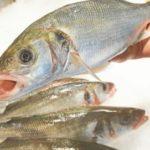 La Secretaría de Pesca Marítima confirma el reparto de cuotas pesqueras en aguas profundas