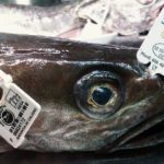 La merluza de pincho de Celeiro entre los mejores alimentos de España