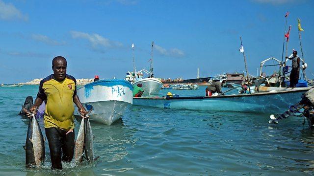 Somalia otorga licencias de pesca a los buques chinos