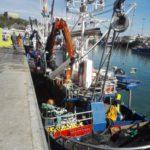 La descarga de pescado fresco desciende cerca de un 8 por ciento