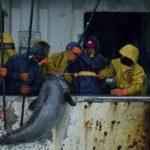 Aetinape muestra que el registro de la jornada laboral evidencia «la dureza» del trabajo marítimo
