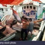 Micronesia lanza un plan de gestión para liderar el mercado de atún