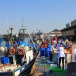 AZTI participará en un proyecto europeo para transformar los descartes de la pesca