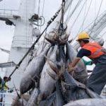 La pesca en Ecuador genera 1.635 millones de dólares producción pesquera estando entre los 25 primeros