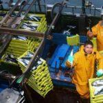 Pesca cambiará el reparto de la cuota de caballa para Asturias en la próxima campaña
