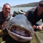 Desarticulada una organización criminal dedicada a la pesca y tráfico ilegal de capturas al este de Europa