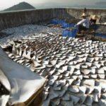 Canadá se convierte en el primer país que veta importar y exportar aletas de tiburón